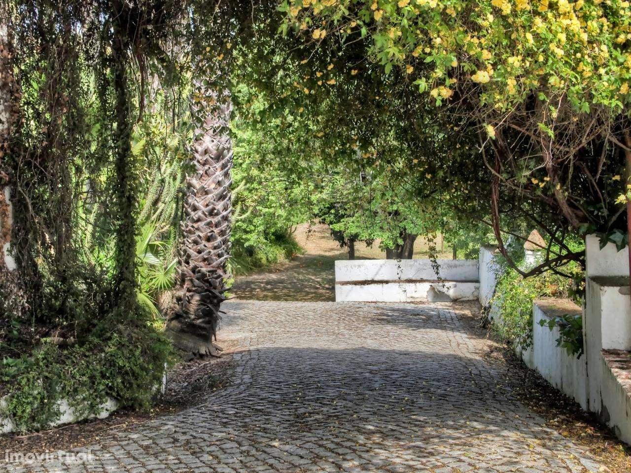 Quintas e herdades para comprar, São Brás e São Lourenço, Elvas, Portalegre - Foto 3