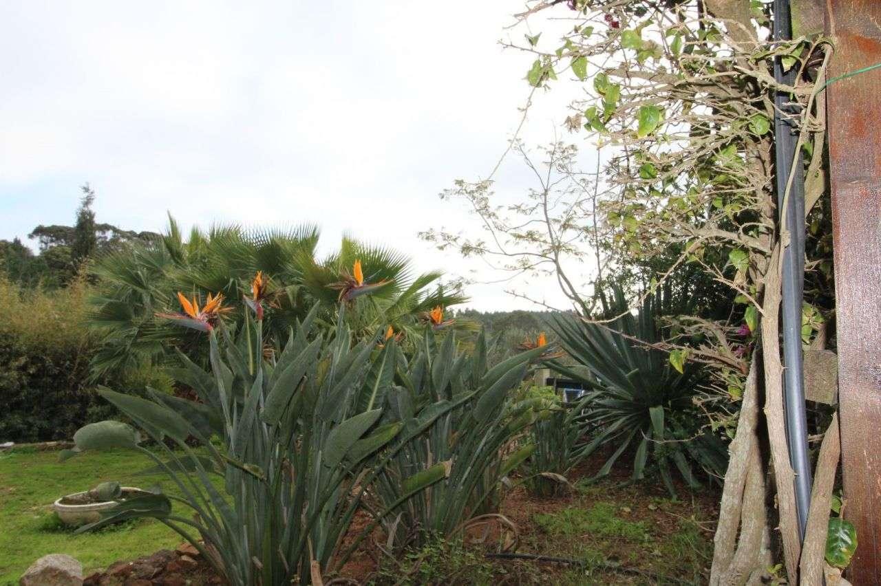 Quintas e herdades para comprar, Aljezur, Faro - Foto 28