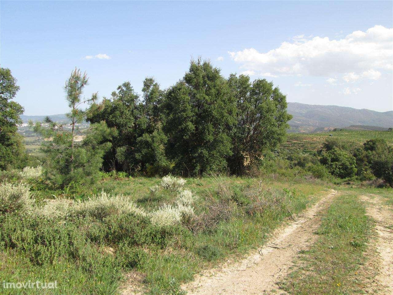 Quintas e herdades para comprar, Telhado, Castelo Branco - Foto 5
