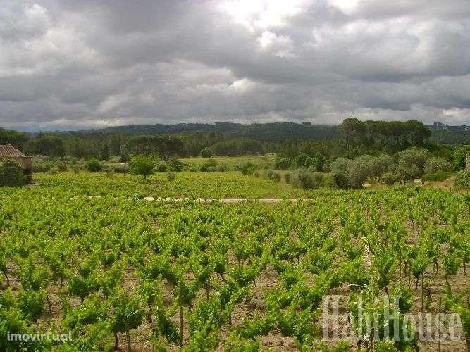 Quintas e herdades para comprar, Santar e Moreira, Nelas, Viseu - Foto 6