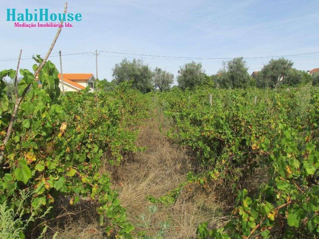 Quintas e herdades para comprar, Silgueiros, Viseu - Foto 16