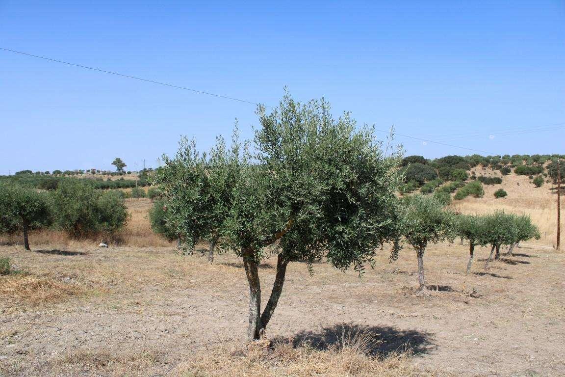 Quintas e herdades para comprar, Santo António (Capelins), Évora - Foto 43