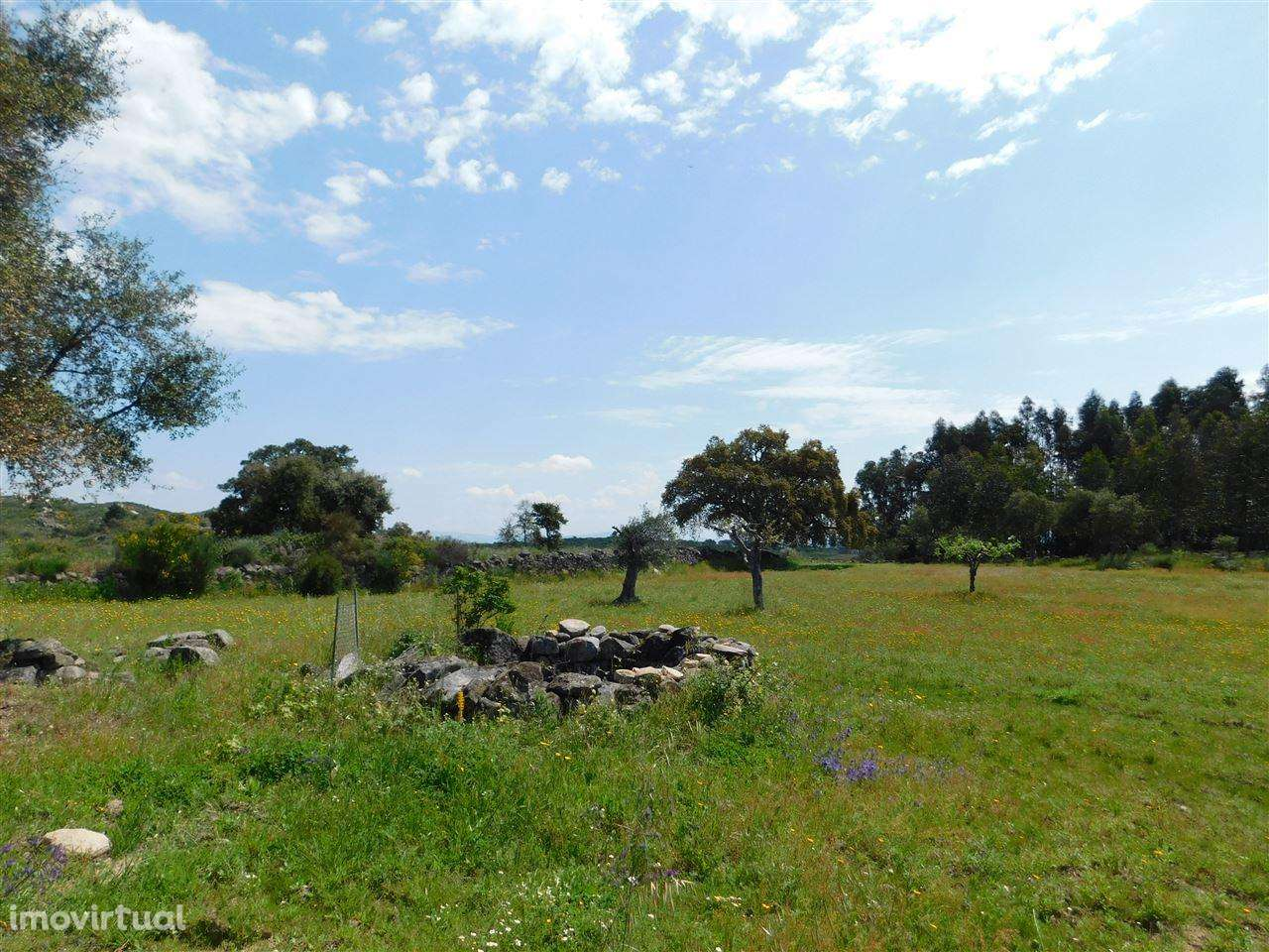 Terreno para comprar, Vale de Prazeres e Mata da Rainha, Castelo Branco - Foto 6