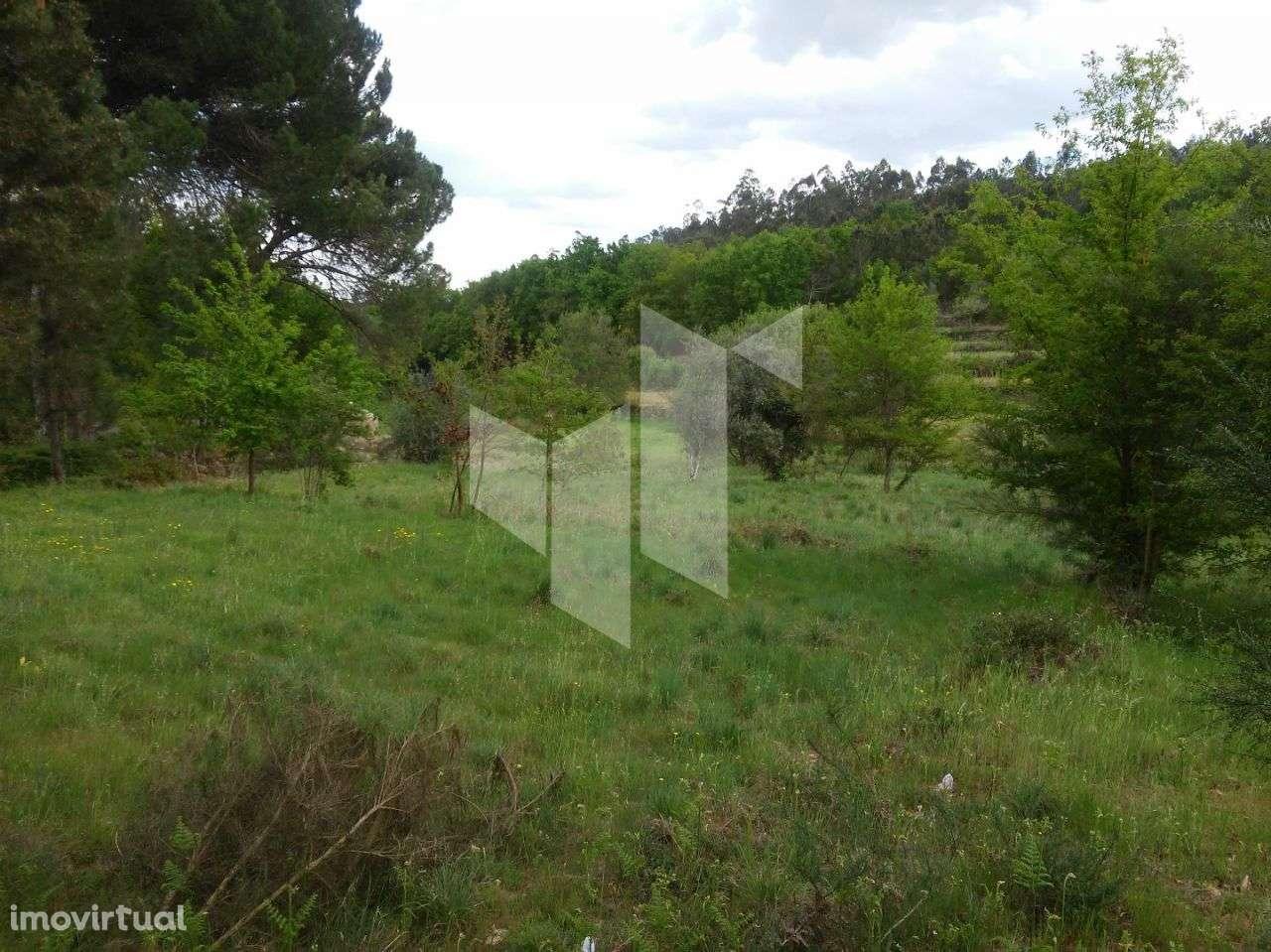 Terreno para comprar, Tonda, Tondela, Viseu - Foto 2