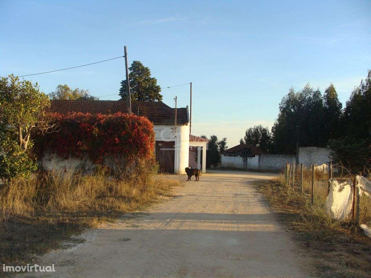 Quintas e herdades para comprar, Alcanhões, Santarém - Foto 11