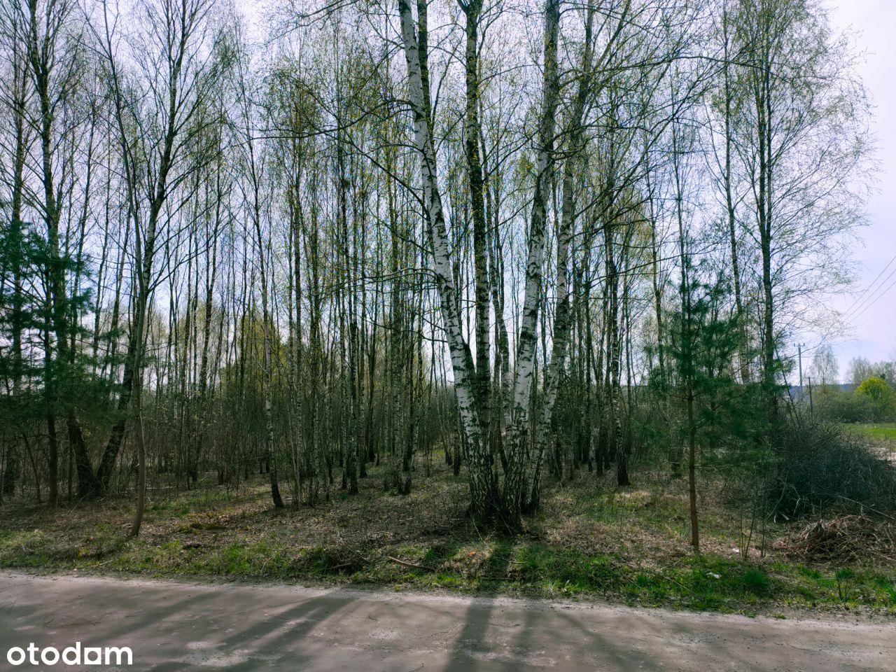 9 działek budowlanych - Rysie, Mazowieckie