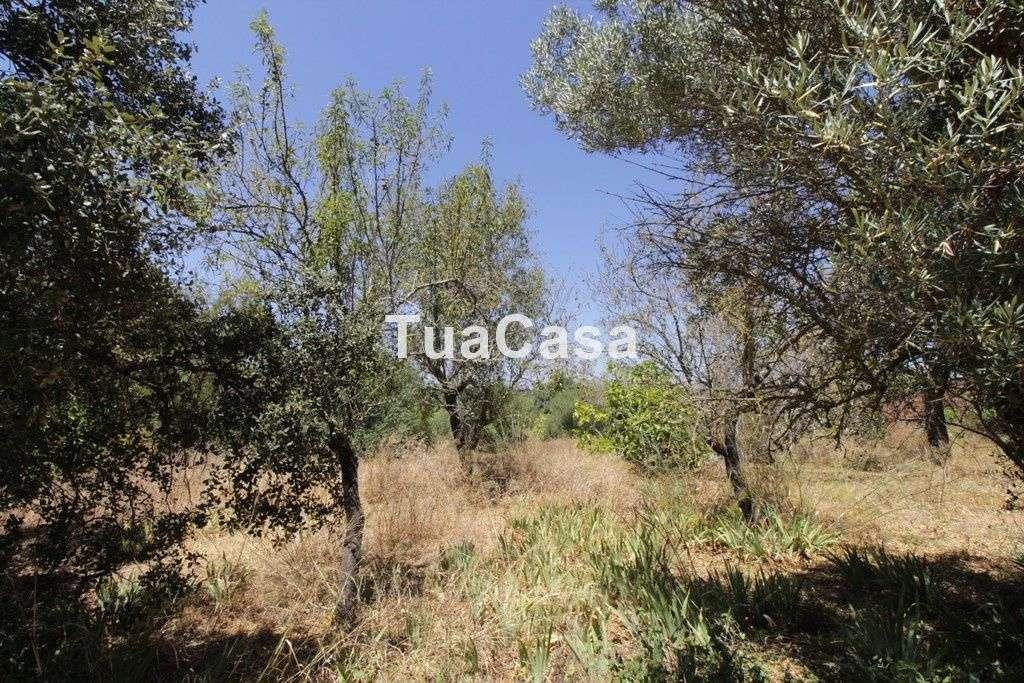 Quintas e herdades para comprar, Luz de Tavira e Santo Estêvão, Tavira, Faro - Foto 8