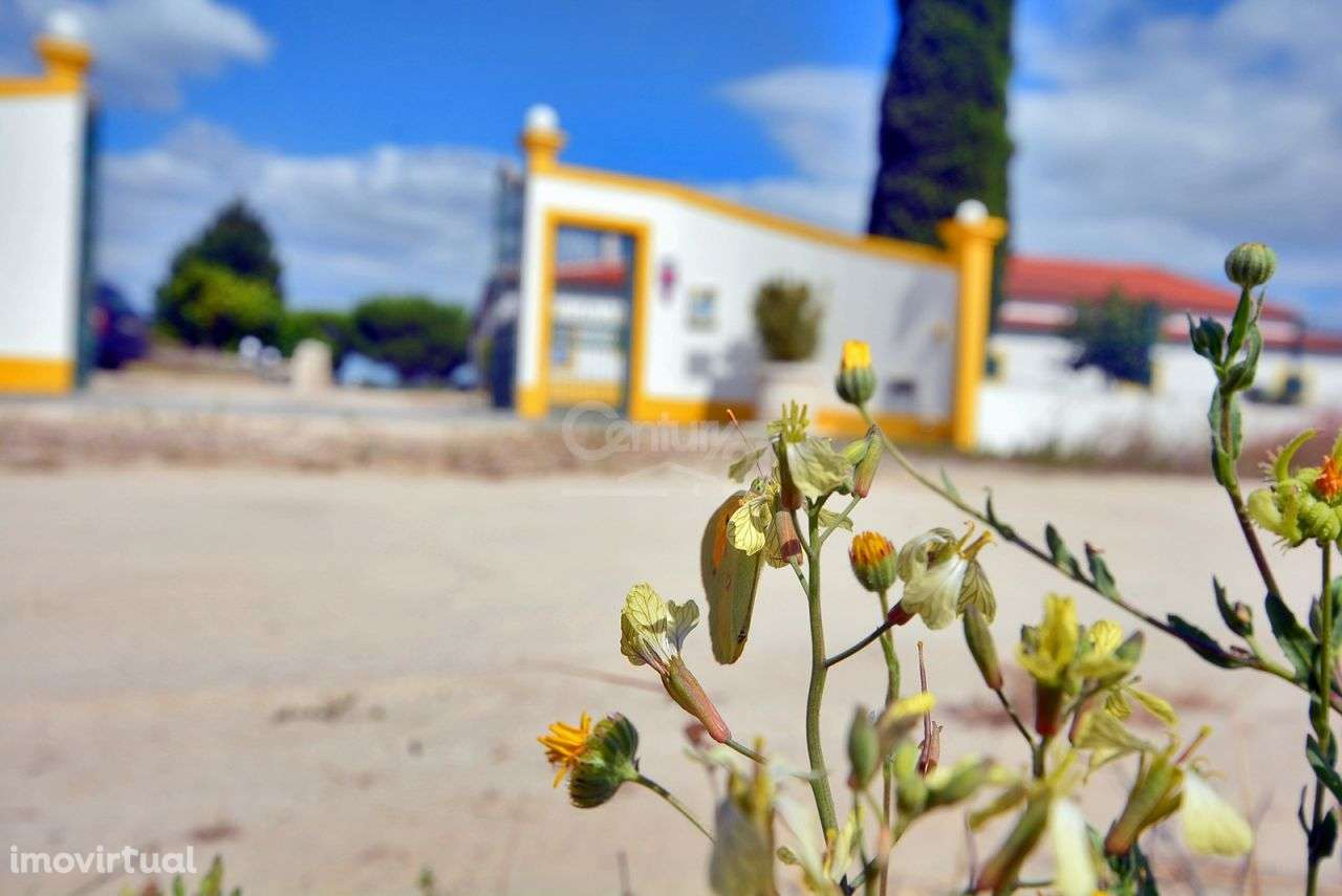 Quintas e herdades para comprar, Branca, Coruche, Santarém - Foto 52