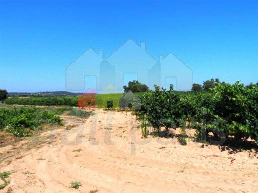Terreno para comprar, Pedrógão, Vidigueira, Beja - Foto 2