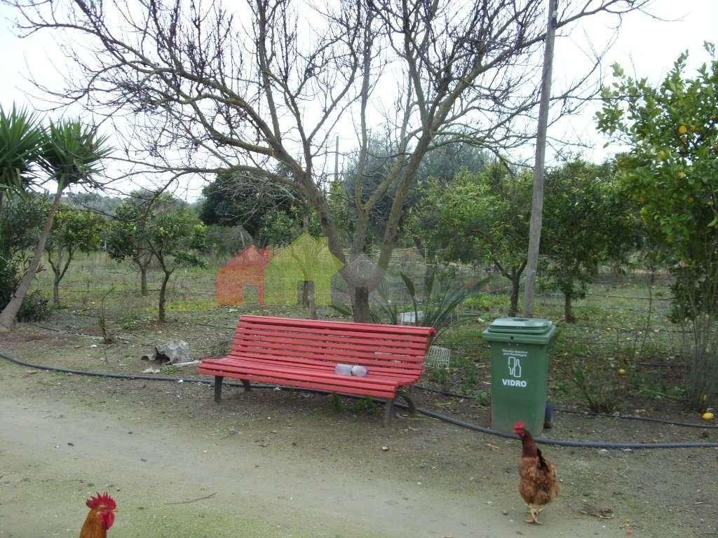 Terreno para comprar, Serpa (Salvador e Santa Maria), Beja - Foto 11