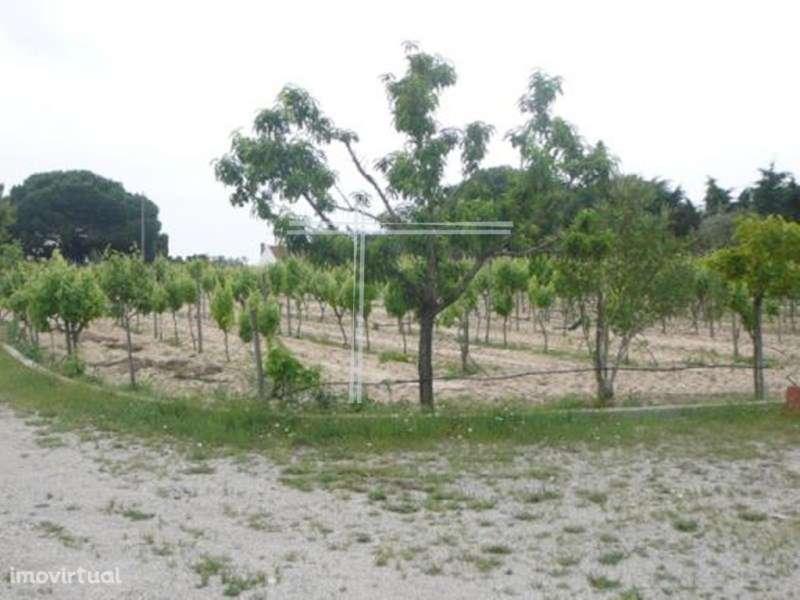 Quintas e herdades para comprar, Pinhal Novo, Setúbal - Foto 32
