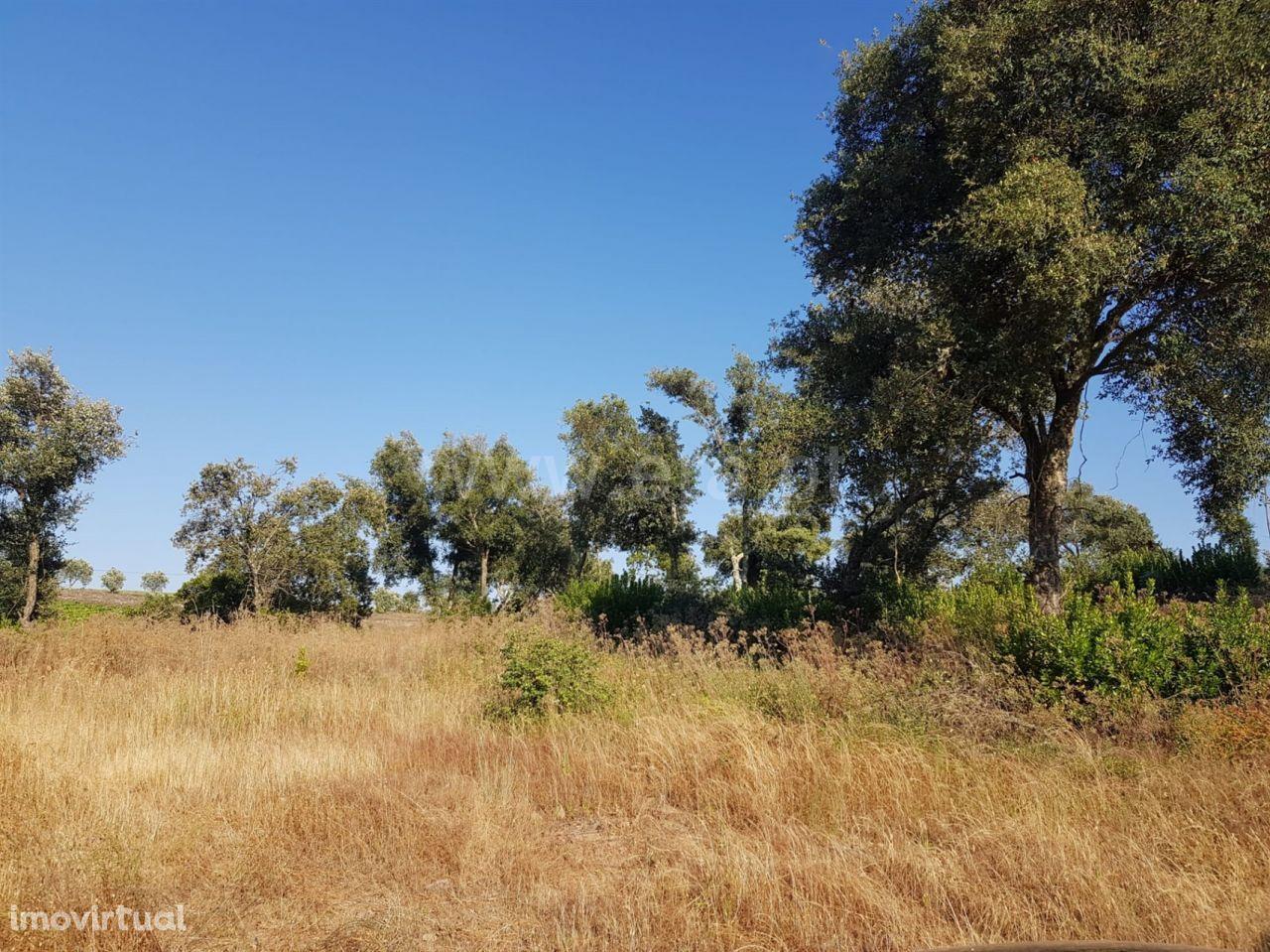 Terreno - Poiares e Canelas