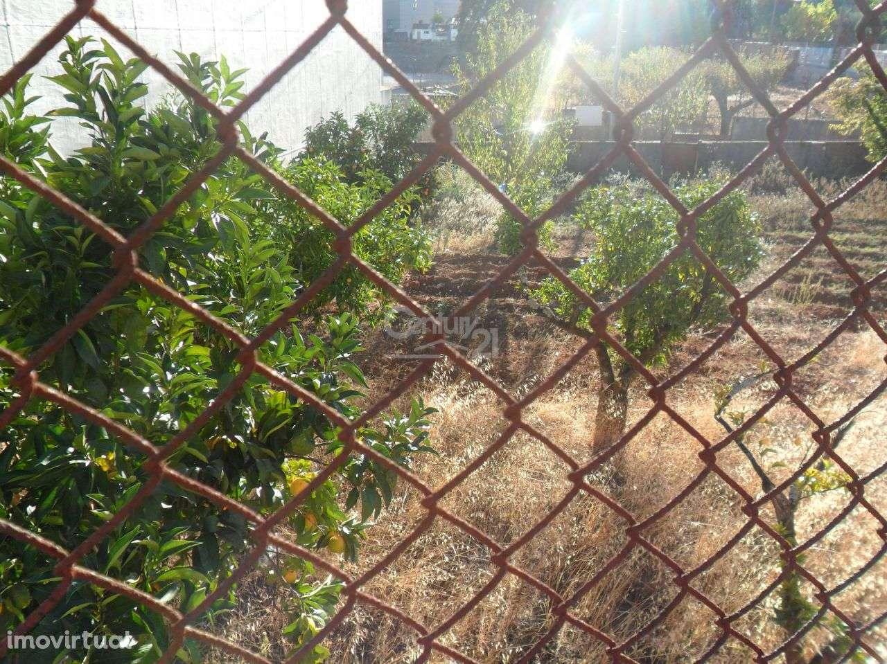 Terreno para comprar, Mira de Aire, Leiria - Foto 2
