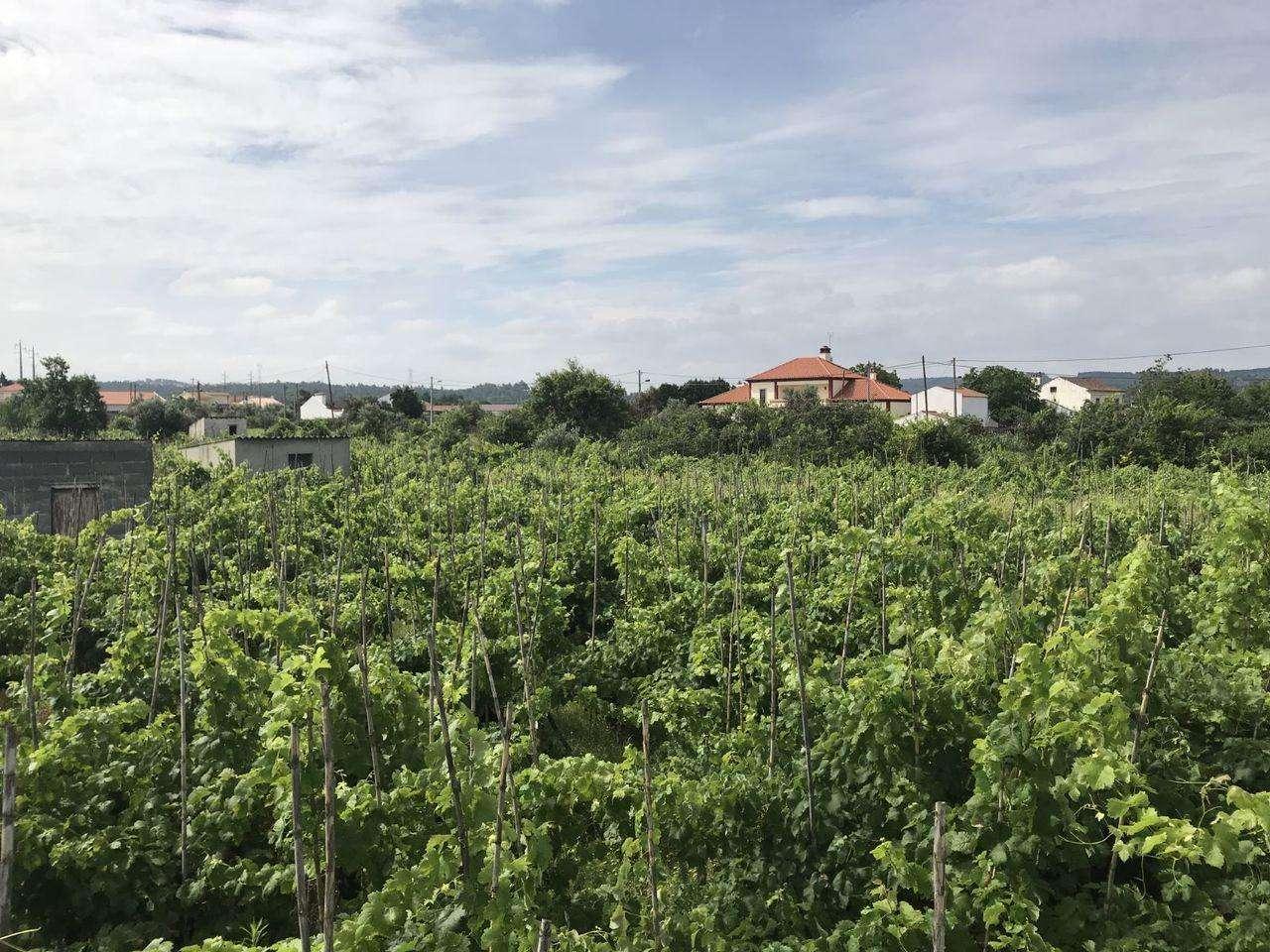 Terreno para comprar, São Miguel do Rio Torto e Rossio Ao Sul do Tejo, Santarém - Foto 5