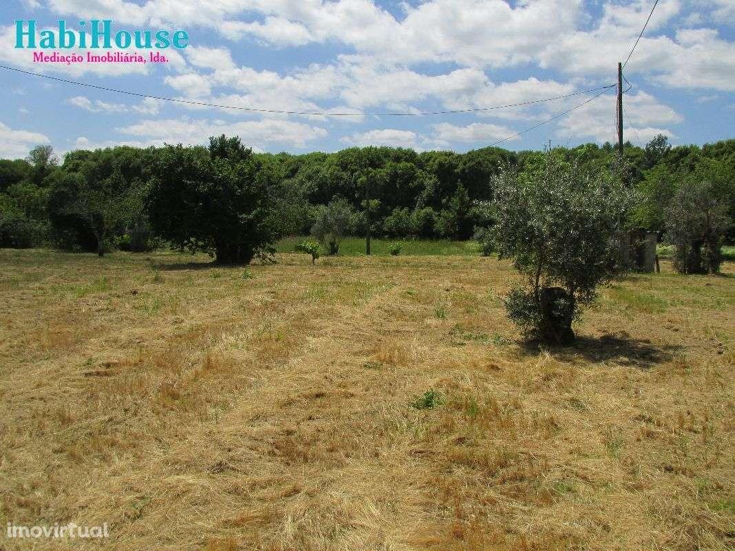 Quintas e herdades para comprar, Ranhados, Viseu - Foto 3