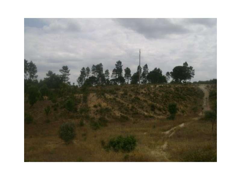 Terreno para comprar, Montargil, Ponte de Sor, Portalegre - Foto 3