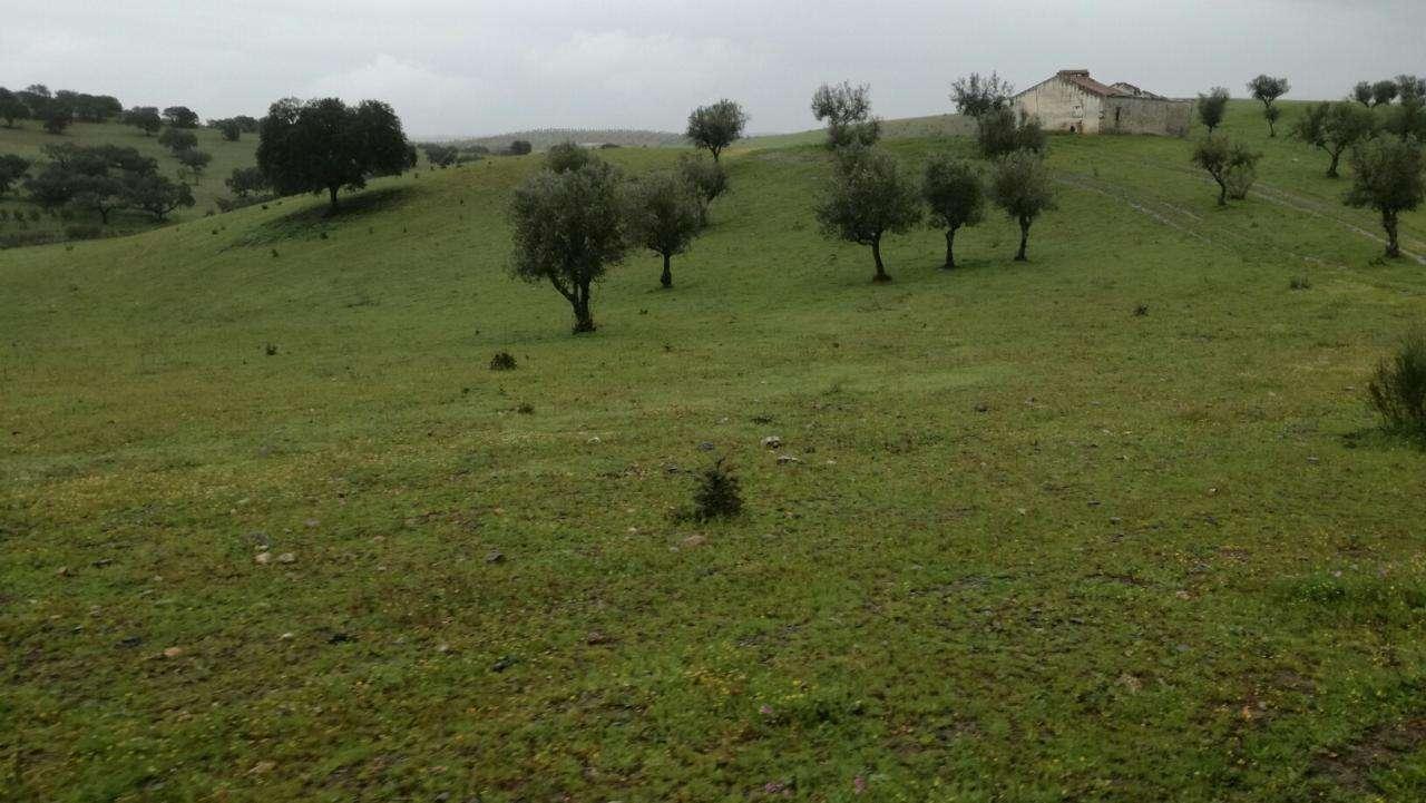Quintas e herdades para comprar, Monte do Trigo, Évora - Foto 3