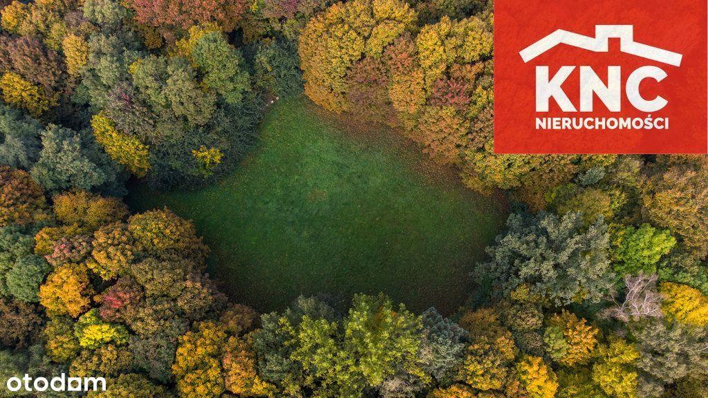 Park Dworski W Dobiecinie