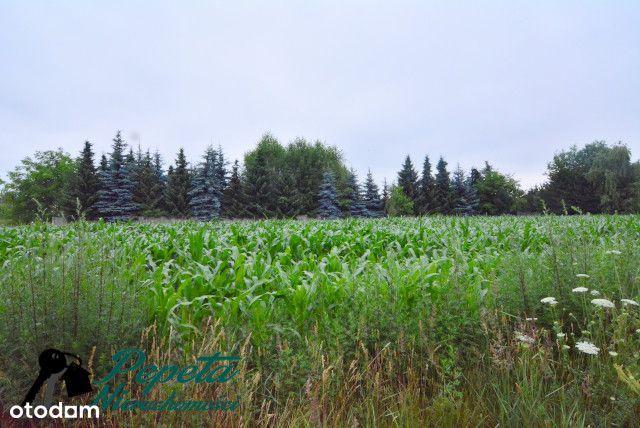 Duża działka w zielonej okolicy - Szczepankowo