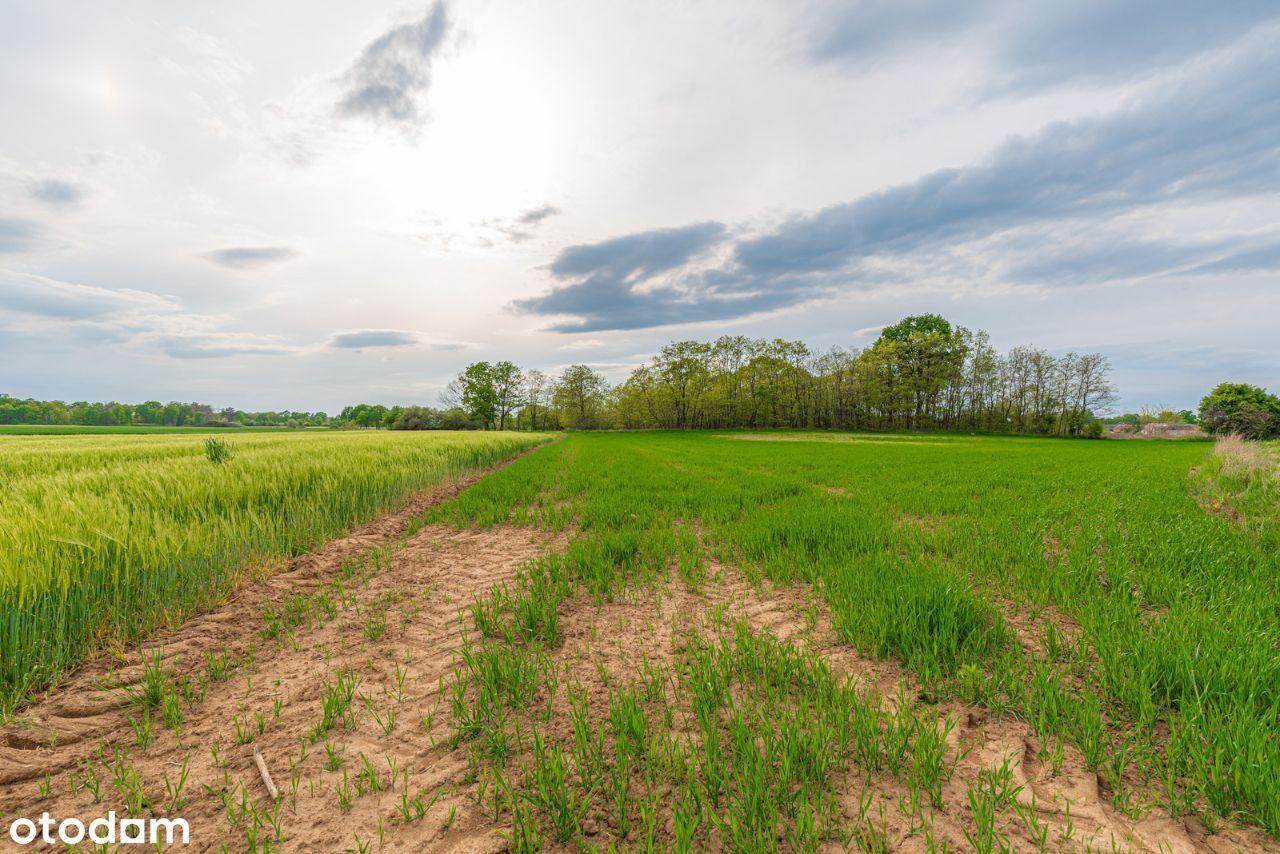 Działka rolna we wsi Wągroda