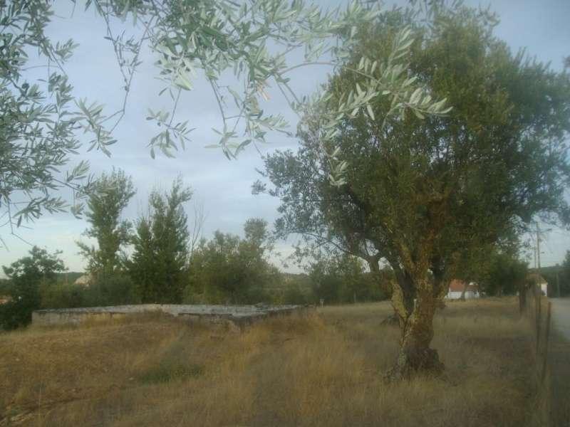 Quintas e herdades para comprar, Bemposta, Abrantes, Santarém - Foto 11