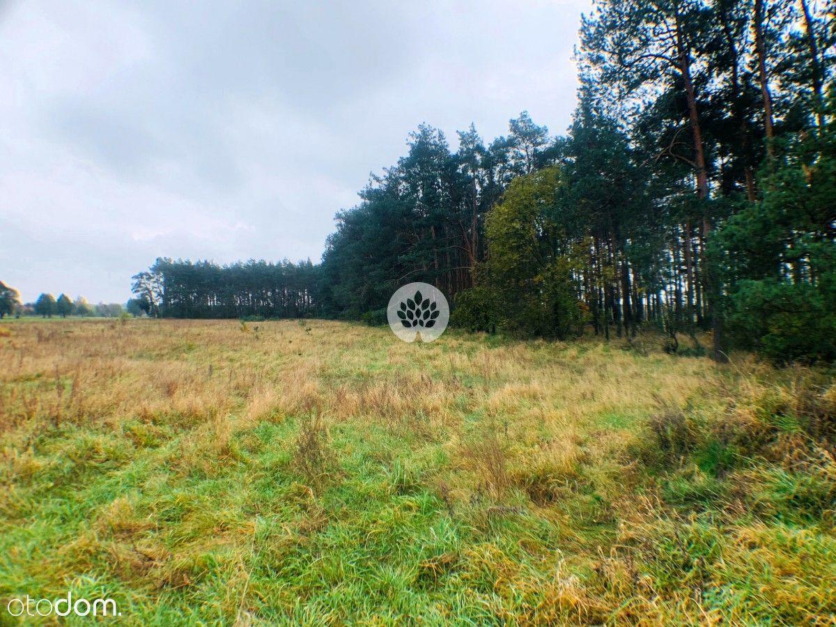 Działka z warunkami zabudowy Prądocin, ściana lasu