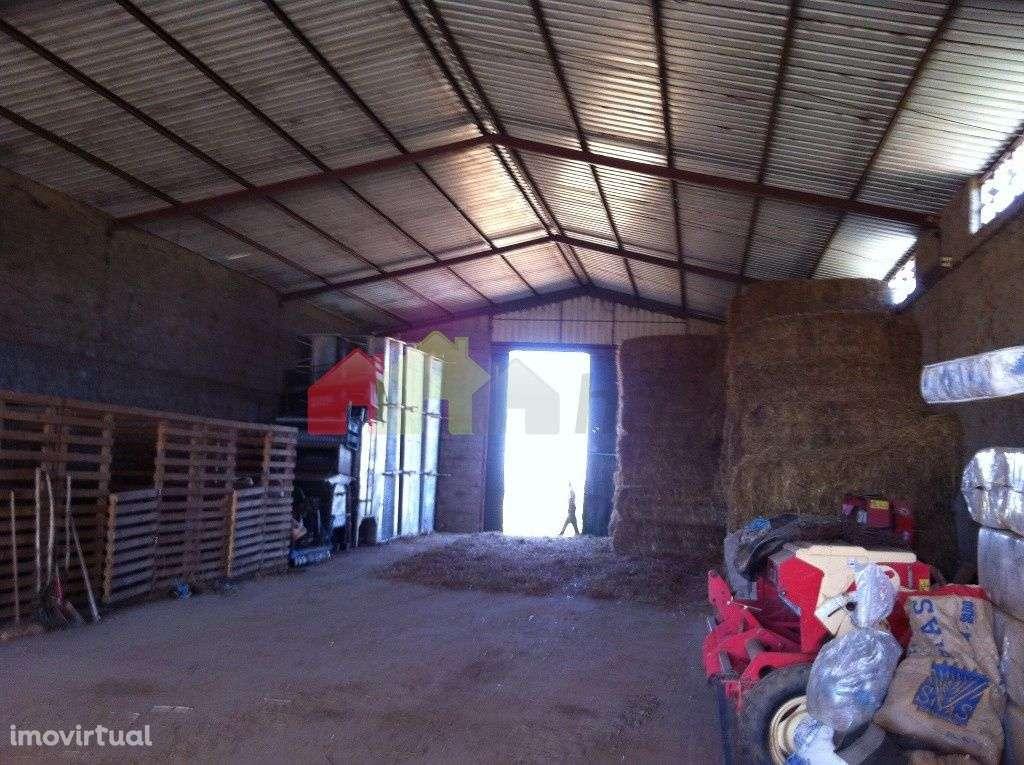 Quintas e herdades para comprar, Aljustrel e Rio de Moinhos, Aljustrel, Beja - Foto 24