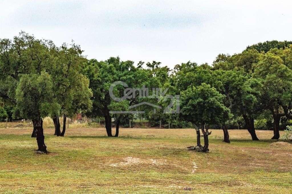Quintas e herdades para comprar, Santiago do Cacém, Santa Cruz e São Bartolomeu da Serra, Setúbal - Foto 43