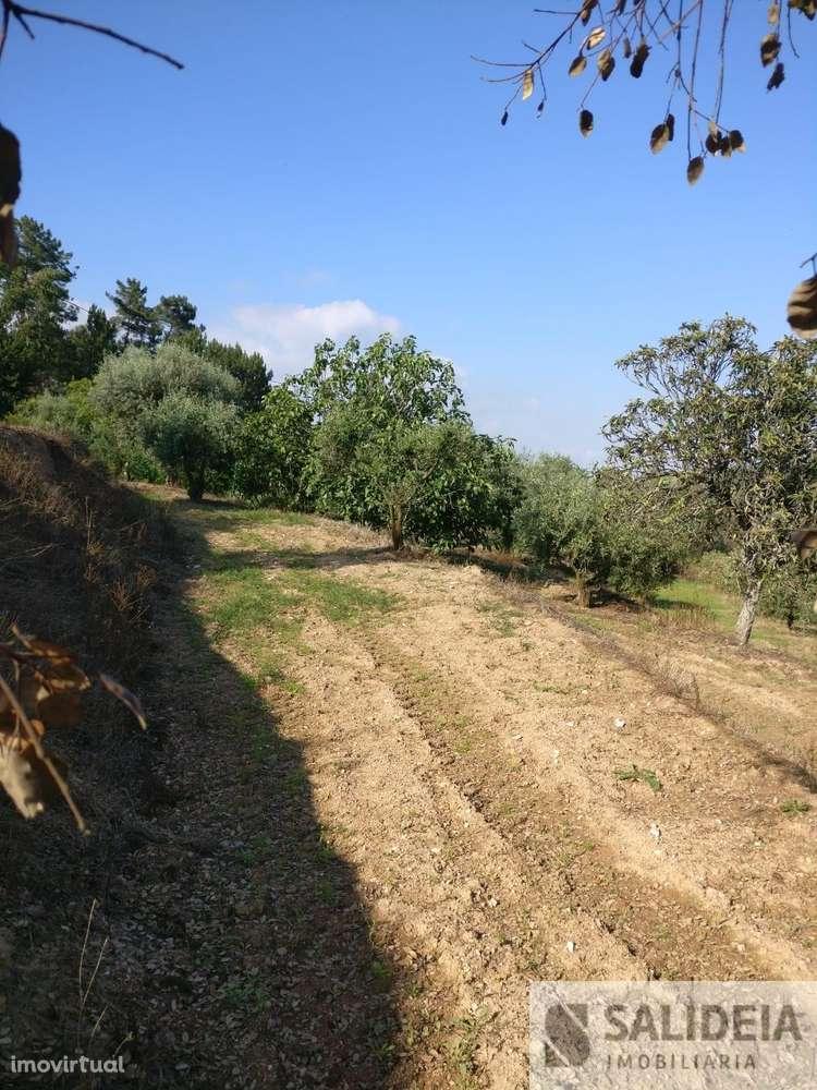 Terreno para comprar, Currelos, Papízios e Sobral, Viseu - Foto 16
