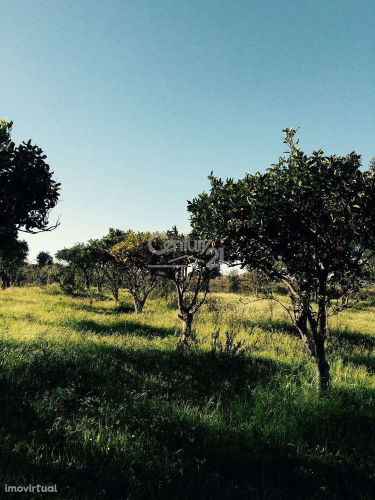 Quintas e herdades para comprar, Ereira e Lapa, Santarém - Foto 6