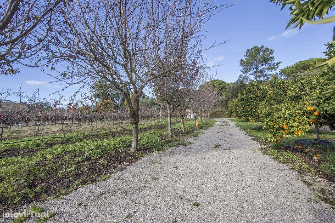 Quintas e herdades para comprar, Azeitão (São Lourenço e São Simão), Setúbal - Foto 40