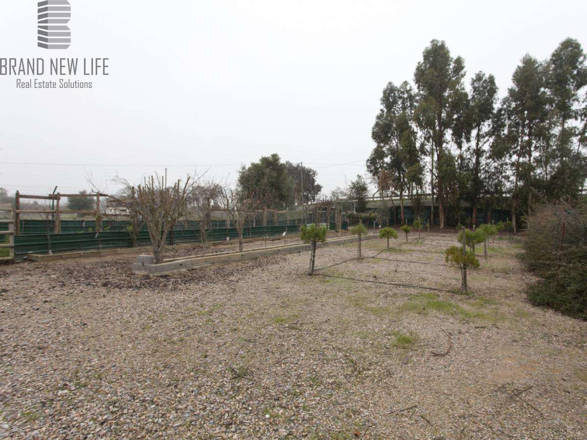 Quintas e herdades para comprar, Benavila e Valongo, Portalegre - Foto 26