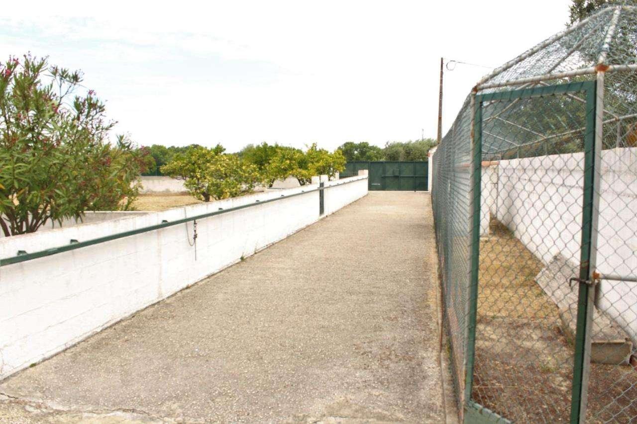 Terreno para comprar, Gâmbia-Pontes-Alto Guerra, Setúbal - Foto 22