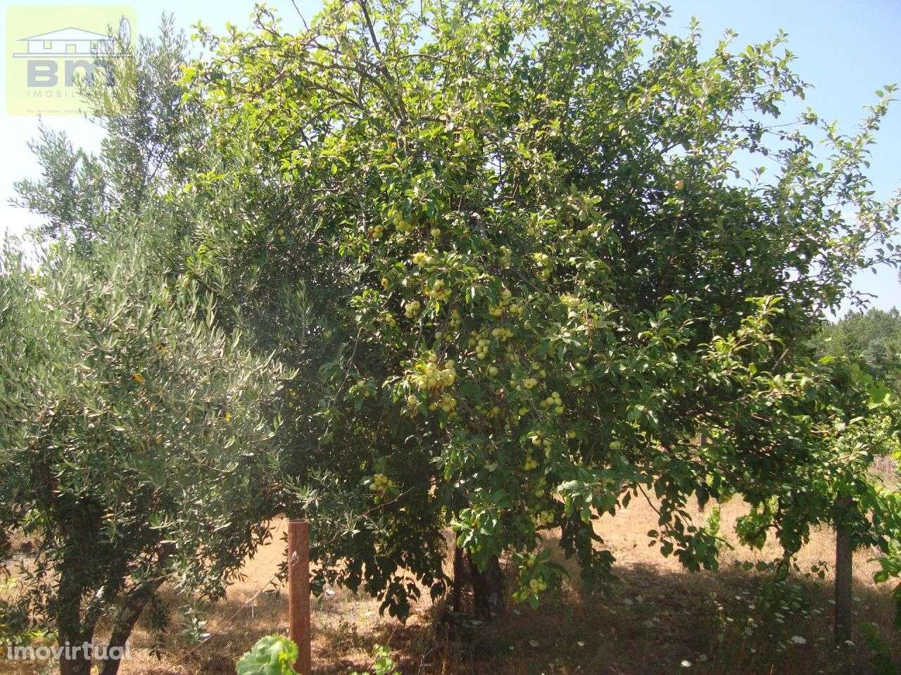 Quintas e herdades para comprar, Almaceda, Castelo Branco - Foto 17