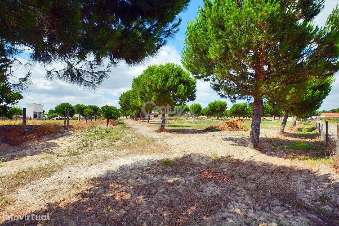 Quintas e herdades para comprar, Branca, Coruche, Santarém - Foto 39