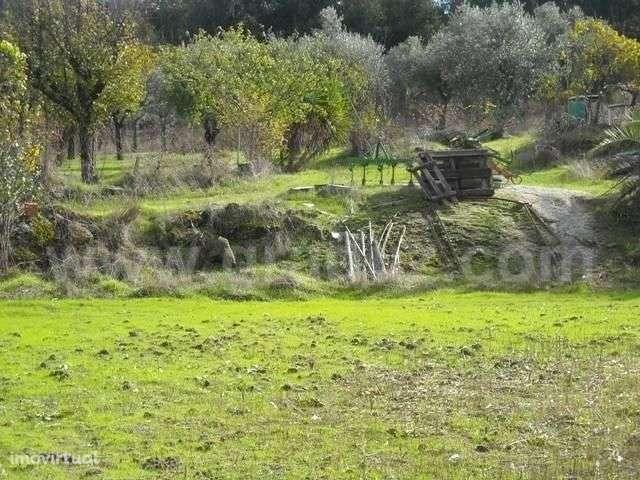 Terreno para comprar, Almaceda, Castelo Branco - Foto 8