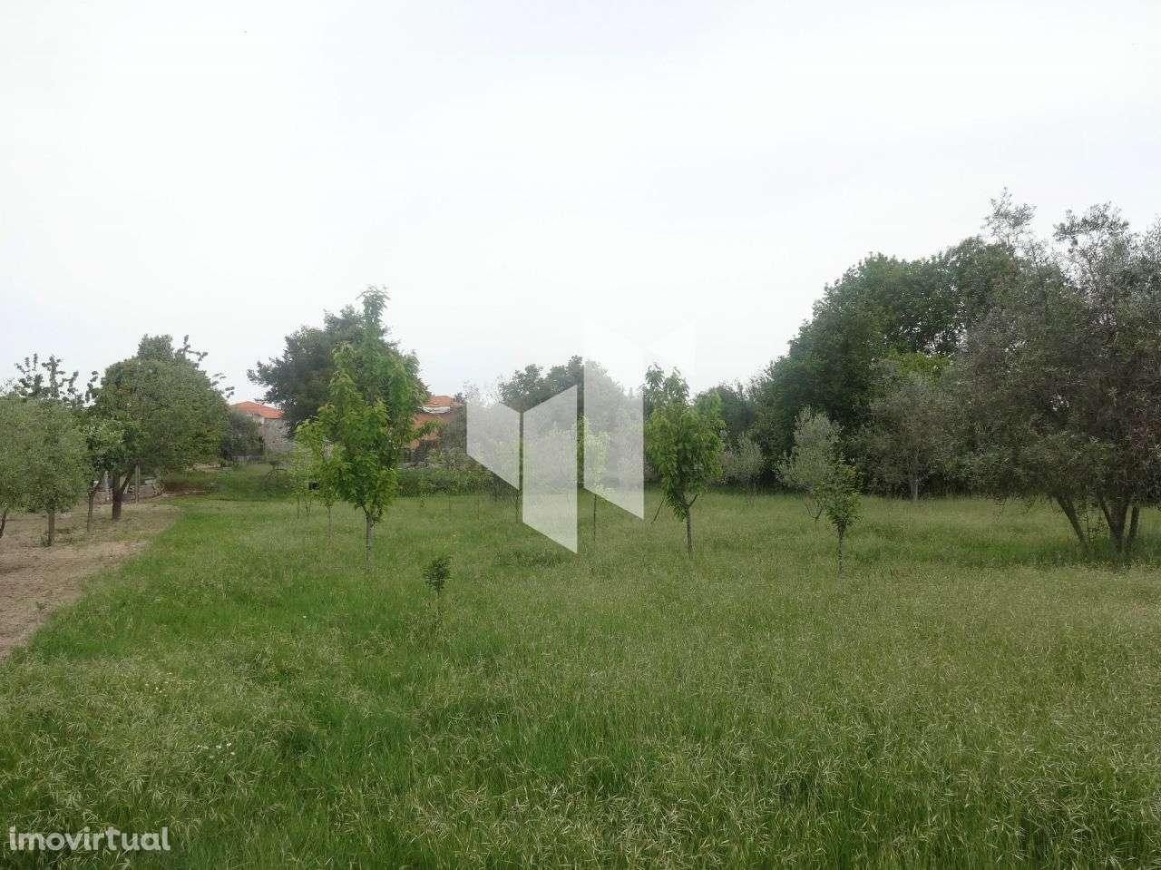 Quintas e herdades para comprar, Romãs, Decermilo e Vila Longa, Sátão, Viseu - Foto 11