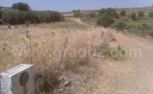 Terreno para comprar, Almaceda, Castelo Branco - Foto 1