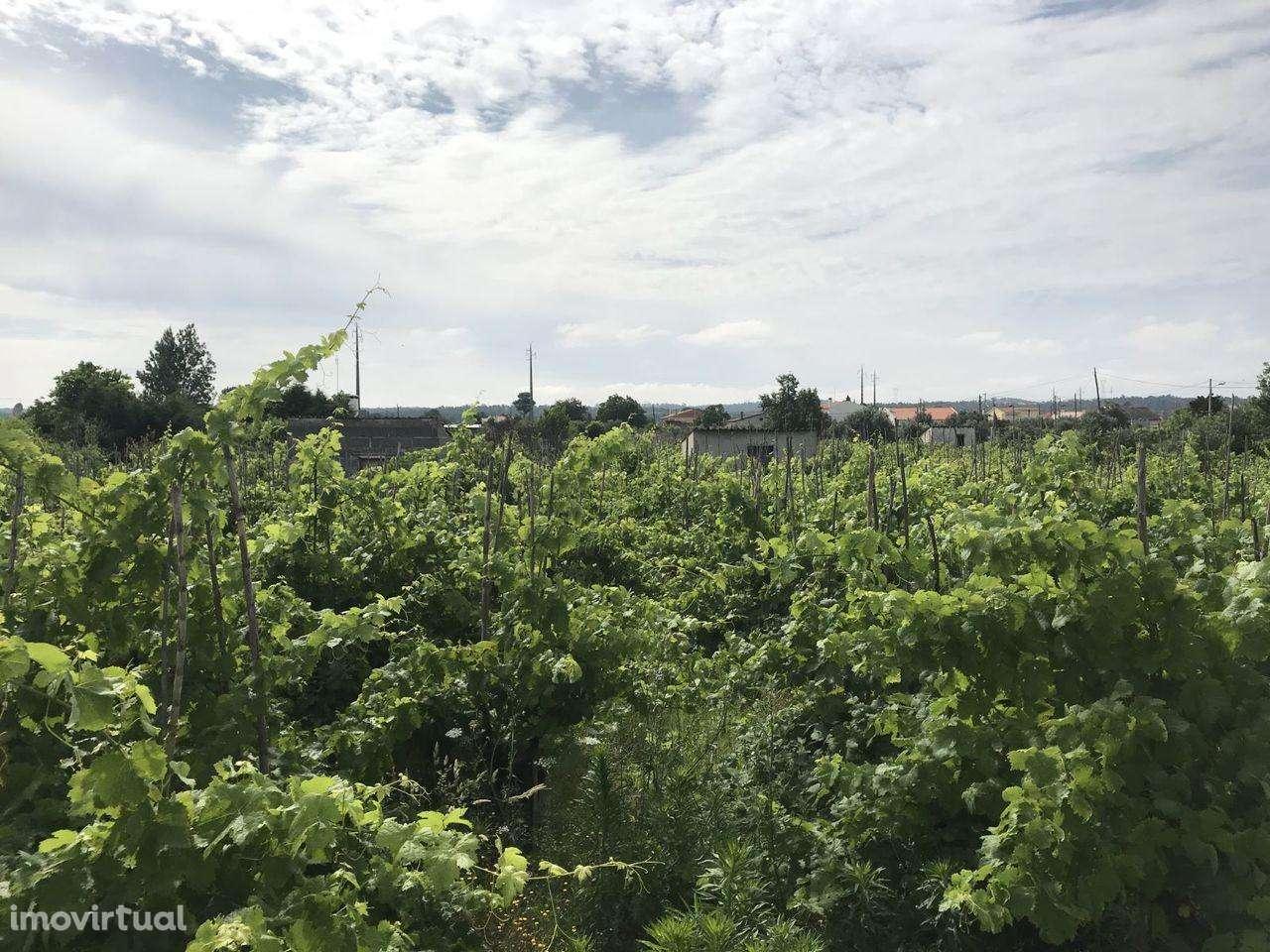 Terreno para comprar, São Miguel do Rio Torto e Rossio Ao Sul do Tejo, Santarém - Foto 2