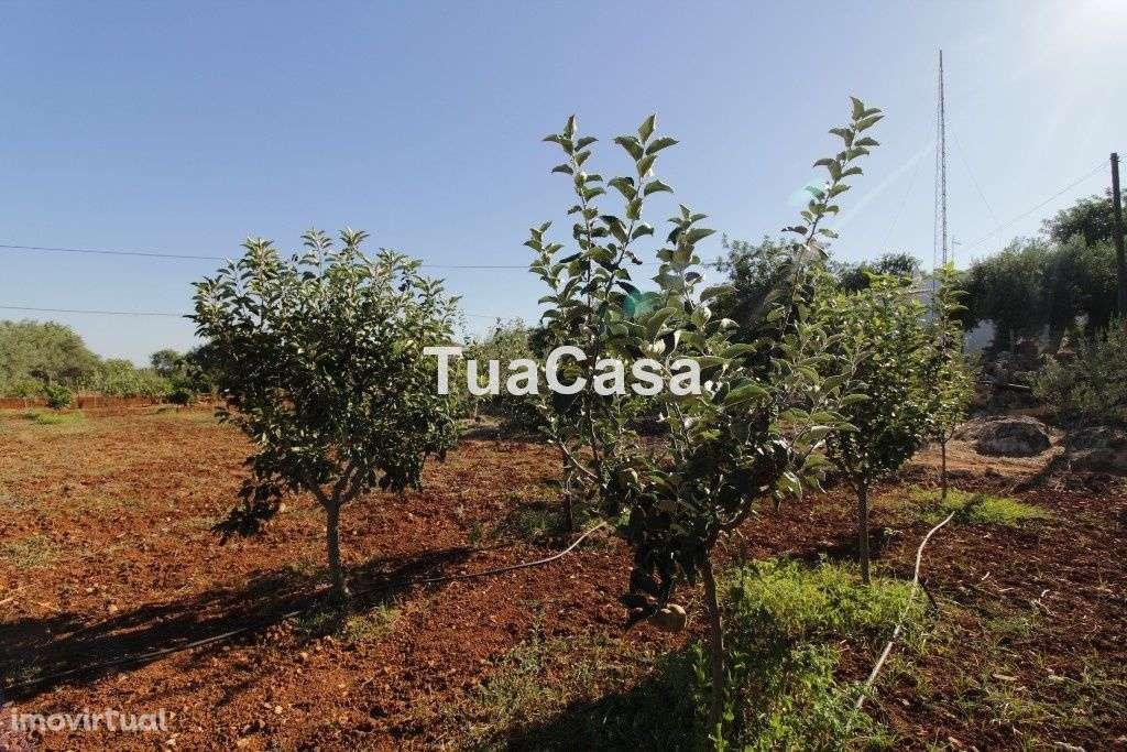 Quintas e herdades para comprar, Moncarapacho e Fuseta, Olhão, Faro - Foto 34