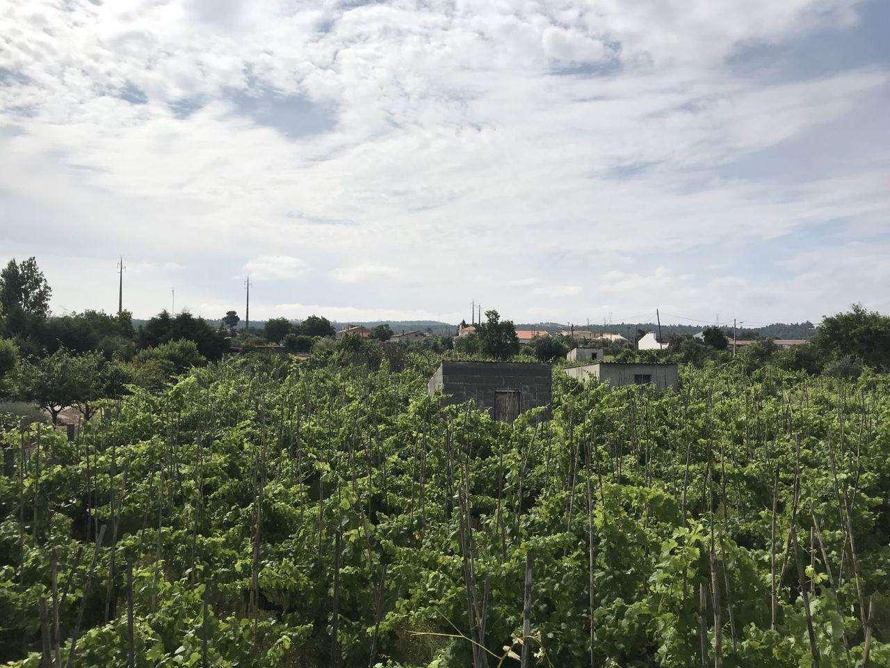 Terreno para comprar, São Miguel do Rio Torto e Rossio Ao Sul do Tejo, Santarém - Foto 3