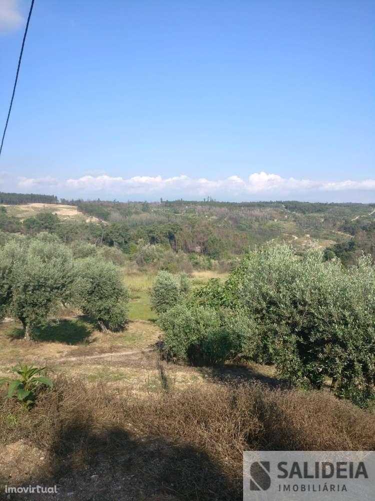Terreno para comprar, Currelos, Papízios e Sobral, Viseu - Foto 10