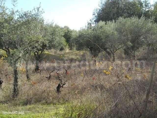 Terreno para comprar, Almaceda, Castelo Branco - Foto 4
