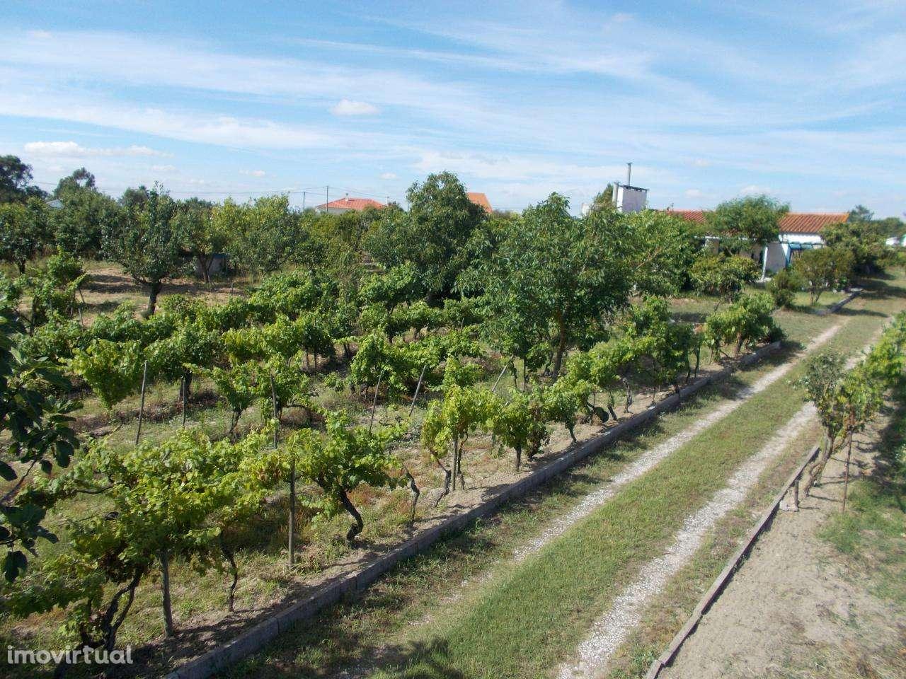 Quintas e herdades para comprar, Vale de Santarém, Santarém - Foto 3