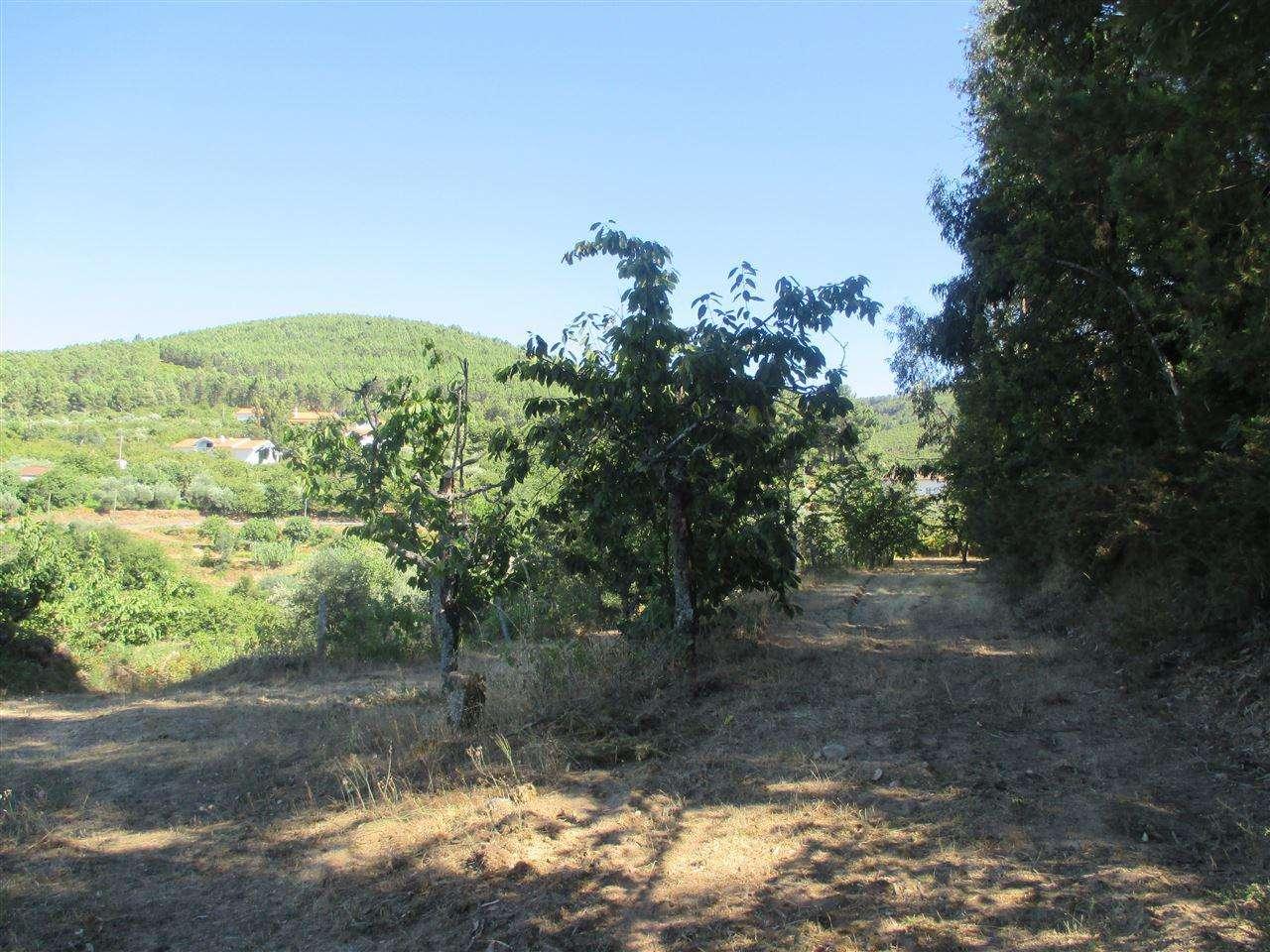 Terreno para comprar, Alcaide, Castelo Branco - Foto 3