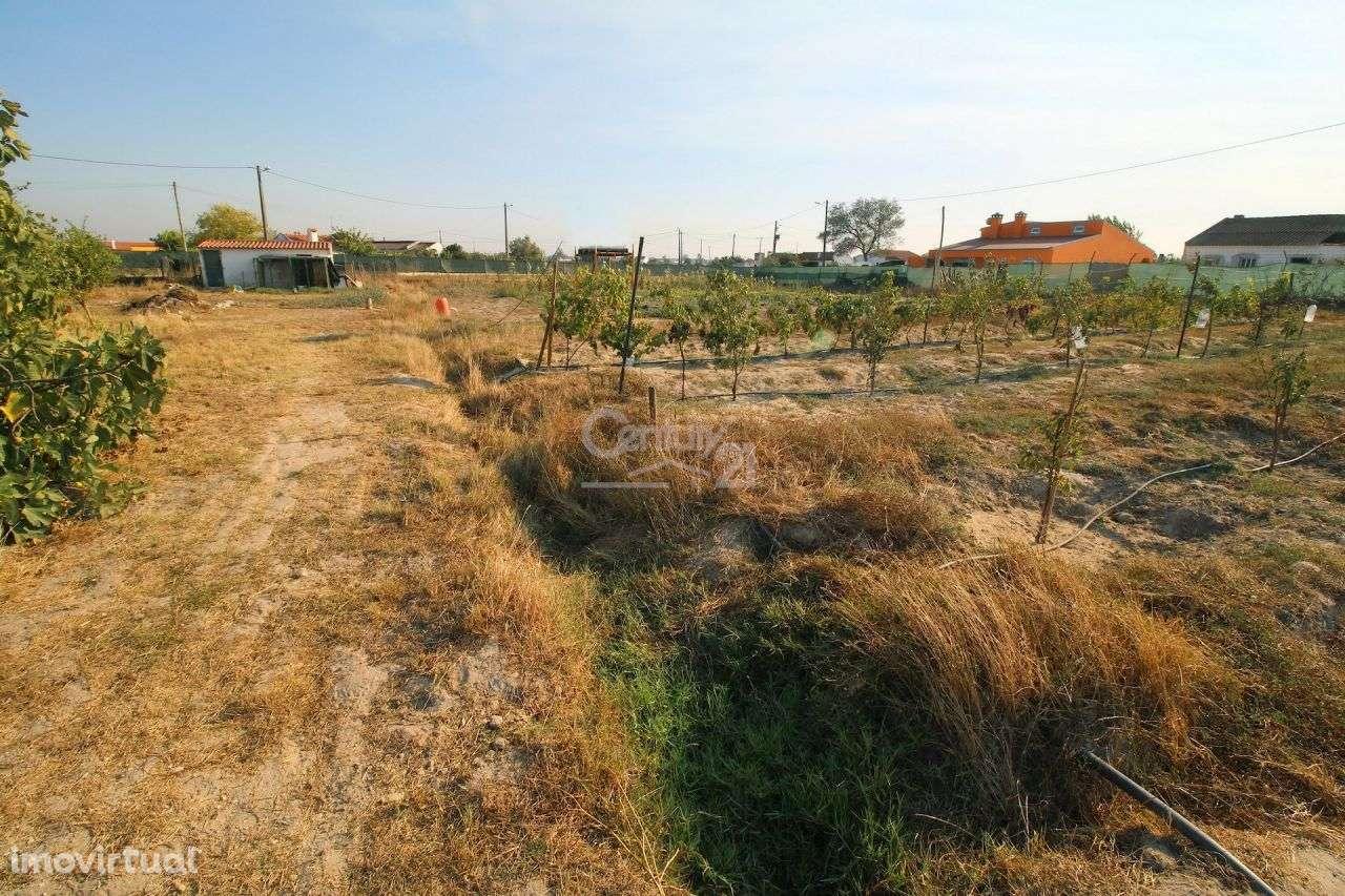 Quintas e herdades para comprar, Poceirão e Marateca, Palmela, Setúbal - Foto 28