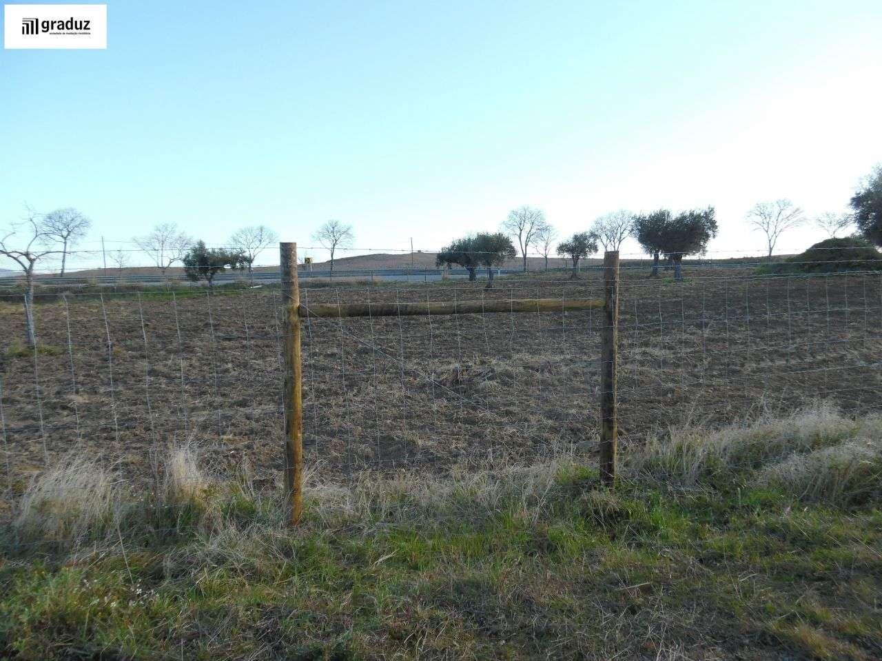 Terreno para comprar, Idanha-a-Nova e Alcafozes, Castelo Branco - Foto 3