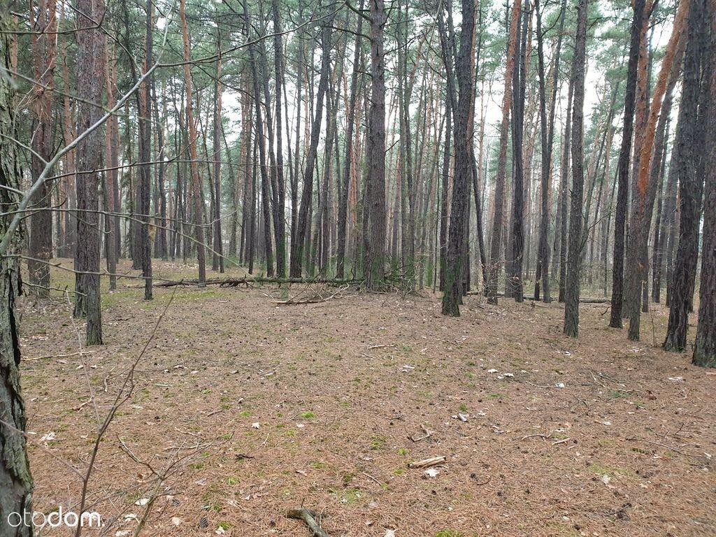 Urokliwa działka budowlana na terenie leśnym