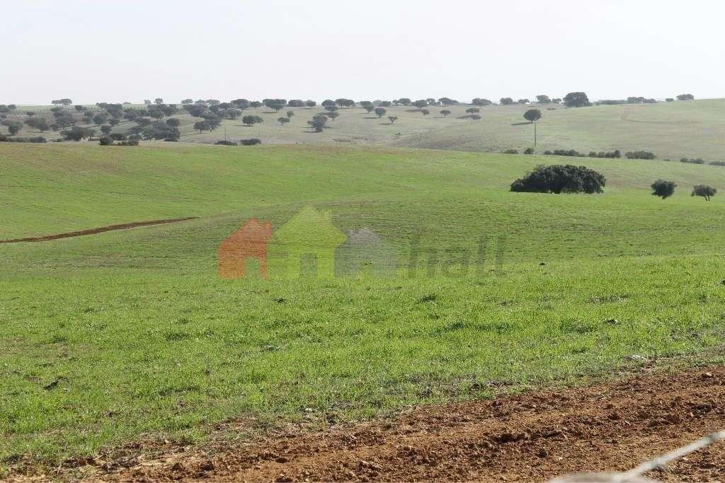 Quintas e herdades para comprar, Albernoa e Trindade, Beja - Foto 2