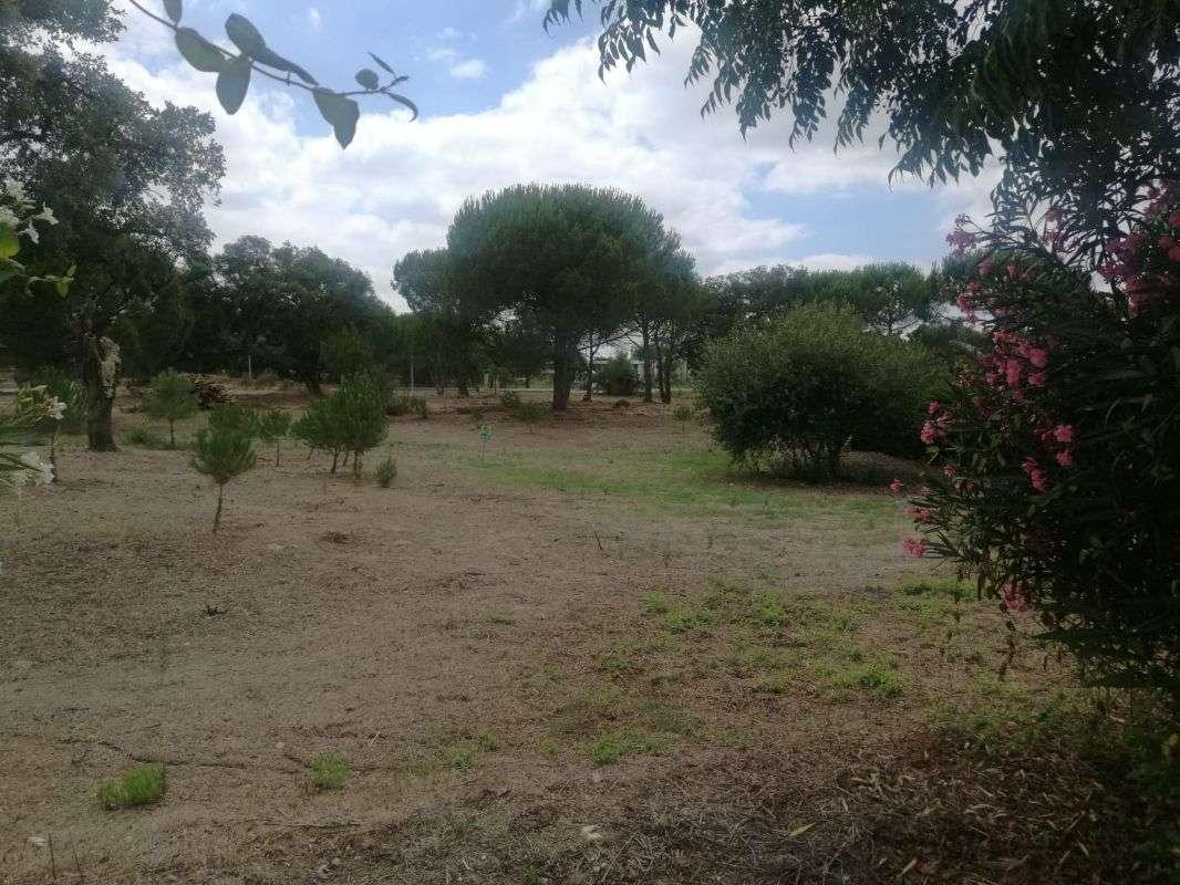 Terreno para comprar, Santo Estevão, Benavente, Santarém - Foto 4